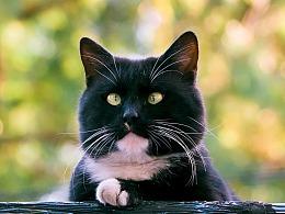 走街串巷寻拍一整年,只为这20张可爱的猫咪萌照!