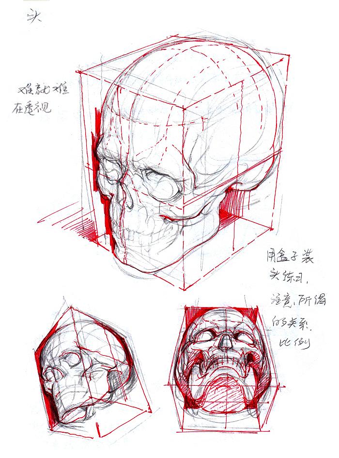 【干货】春哥制造:人体结构绘画药方系列(二)