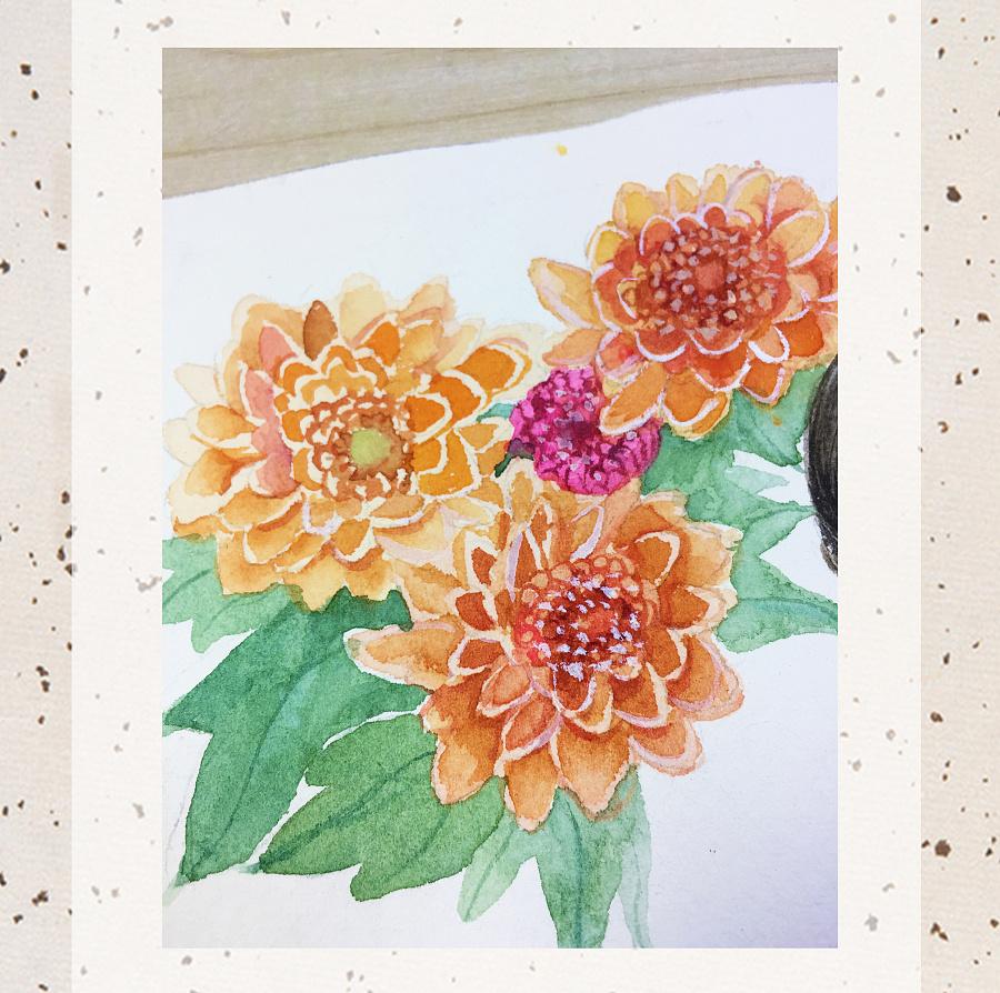 水彩手绘--九月菊