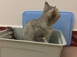 """箱子放久了会""""长出""""猫哦."""