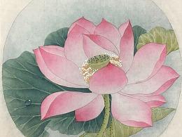 花鸟工笔画(小合集)