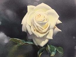 超详细水彩白玫瑰教程