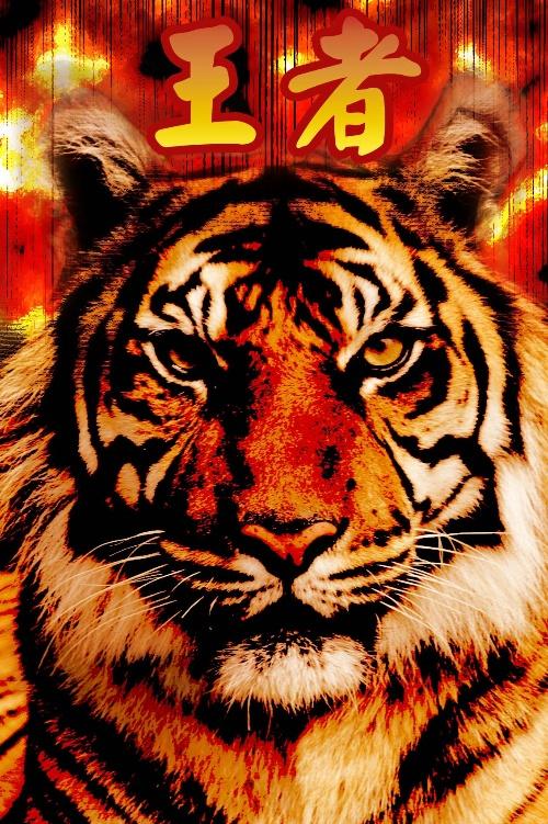壁纸 动物 虎 老虎 桌面 500_751 竖版 竖屏 手机