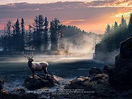 森林里,日出时候的斑鹿