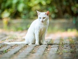 寻猫集87