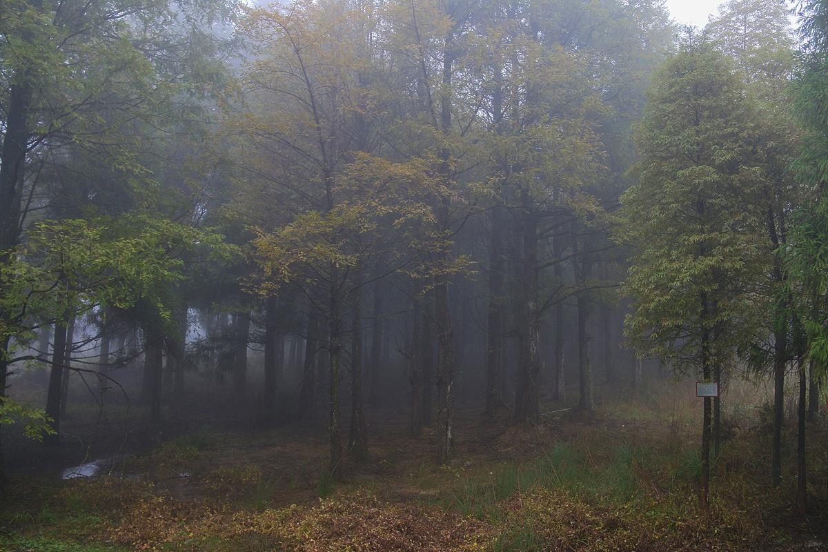 梦见一片茂盛的大森林 梦见高大茂盛的树木