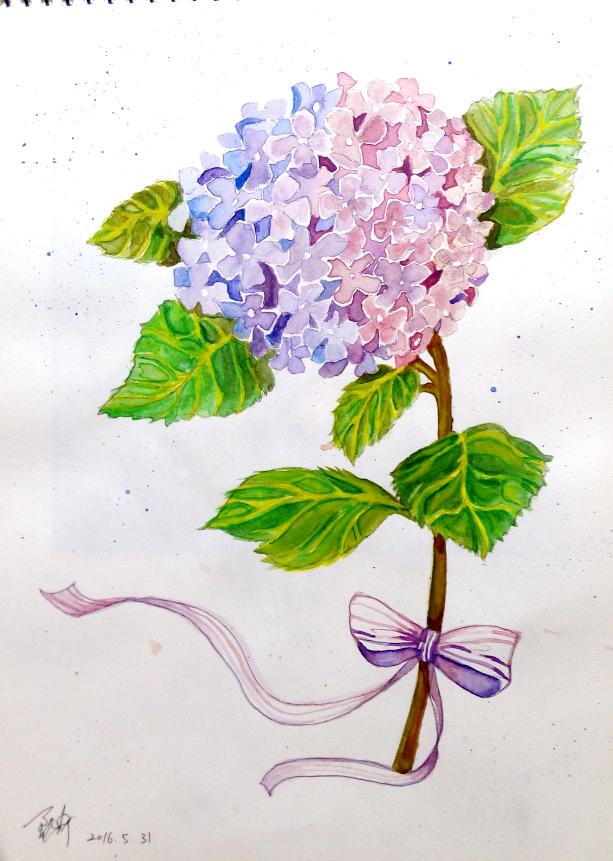 水彩花卉|绘画习作|插画|灵听