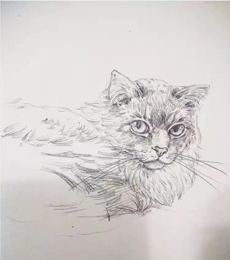 动物手绘图铅笔