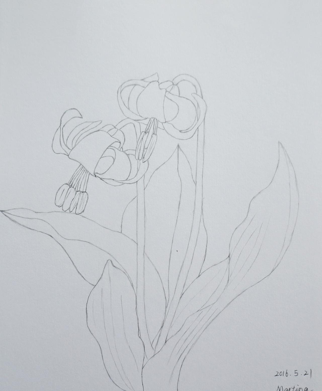 彩铅简笔画手绘