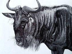 大KAI动物钢笔画《角马》