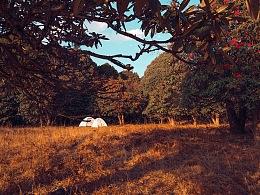背着帐篷去拍照之苍山西坡高山杜鹃
