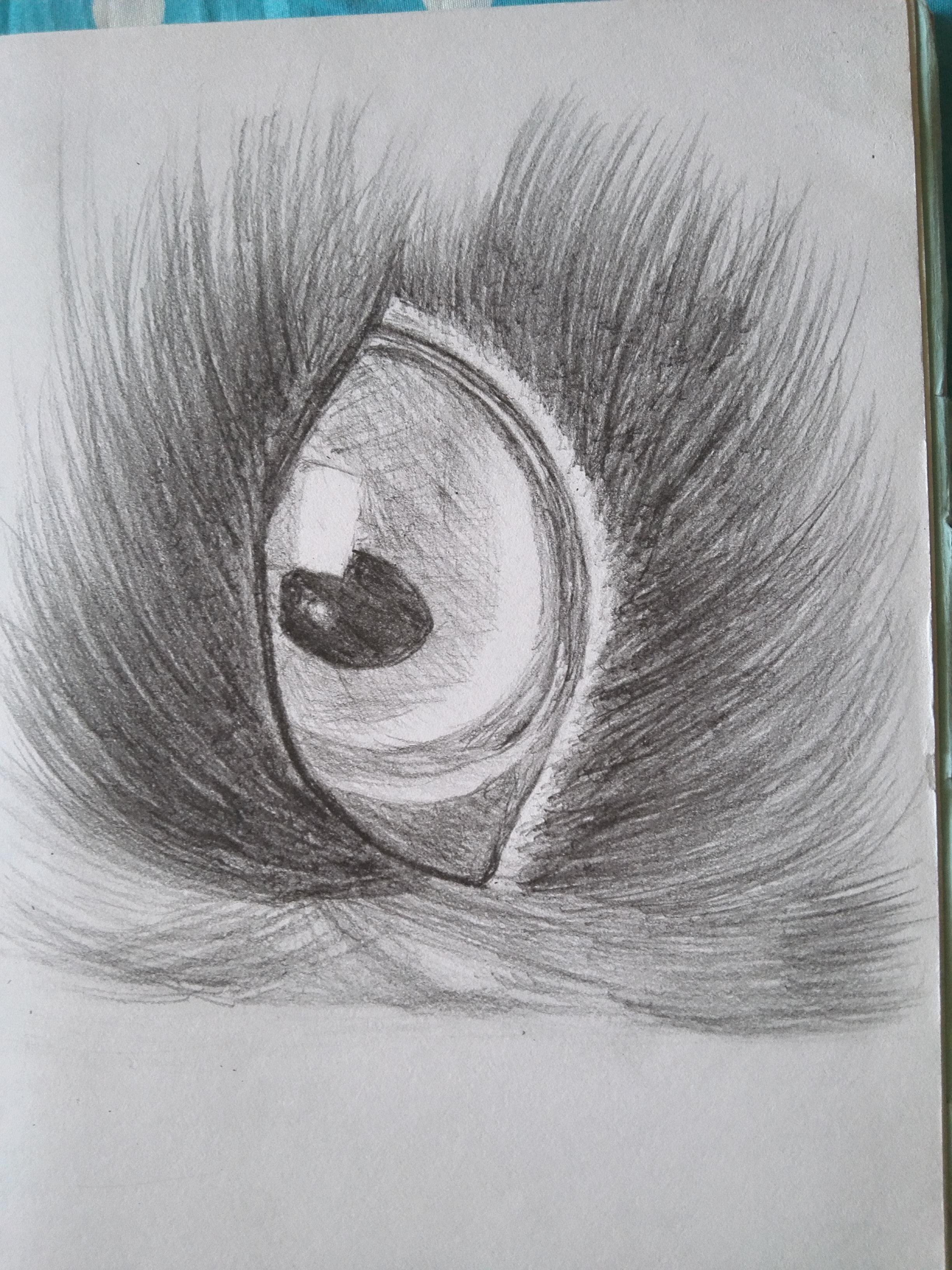 一只毛发动物的眼睛