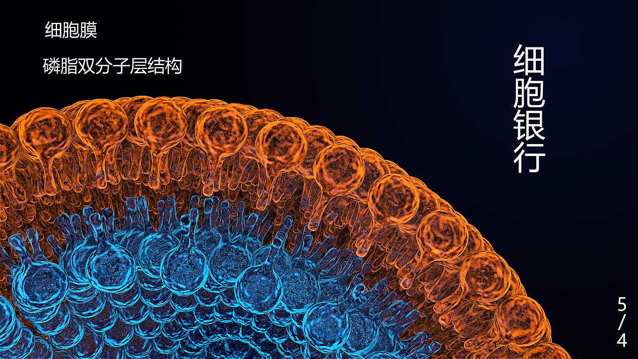 细胞膜结构示意图