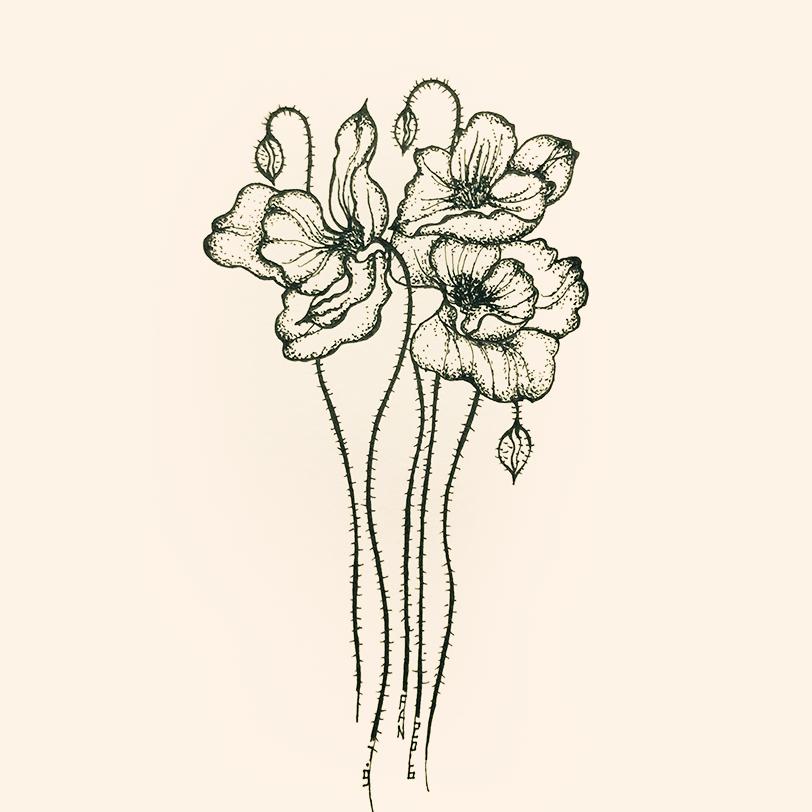 手绘花卉集(一)