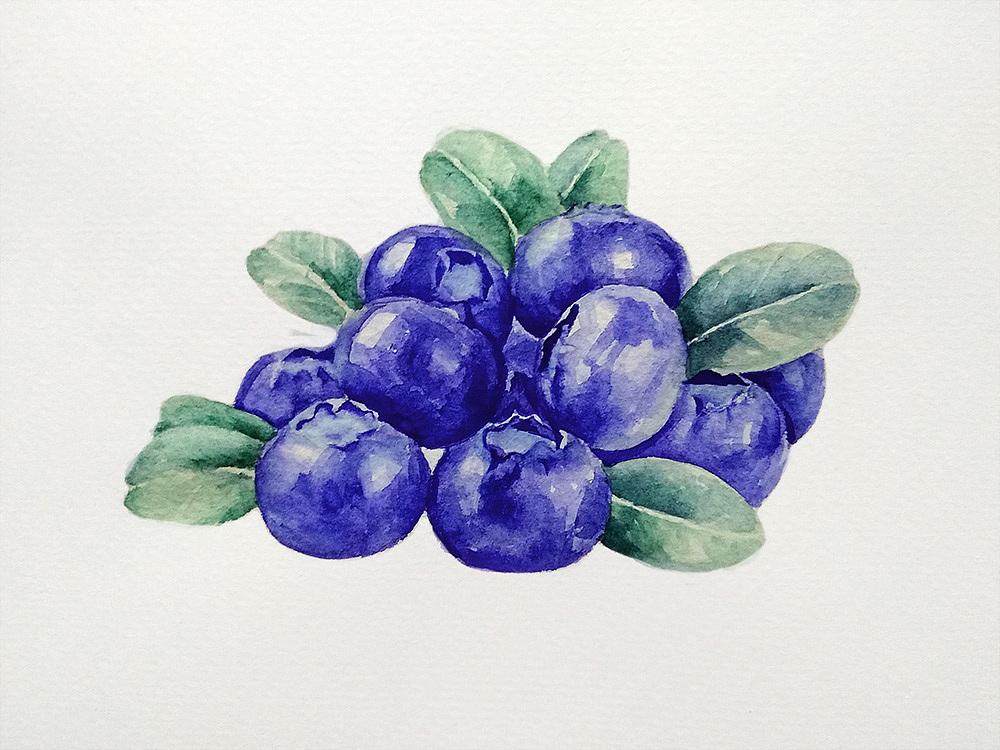 手绘蓝莓水彩画,第一次画哦~