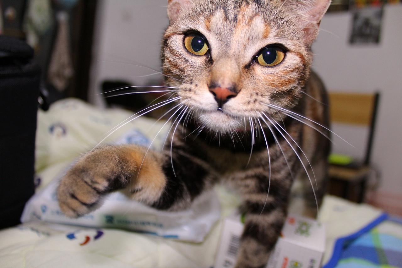 我家有猫之全家有猫病|摄影|动物|口罩猫 - 原创作品