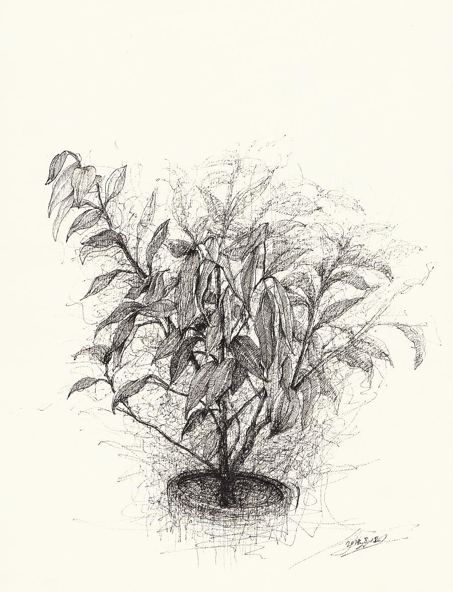 zd黑白插画-淡彩- 速写成长日记|绘画习作|插画|zdh