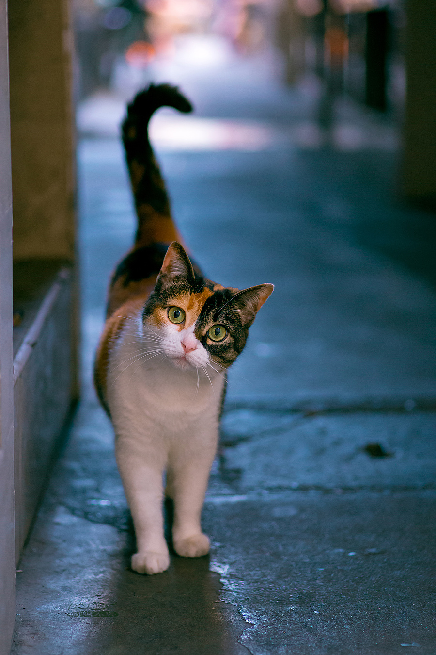 查看《拍了1整年,走过10多座城市,只为这30张年度猫片!》原图,原图尺寸:1280x1920