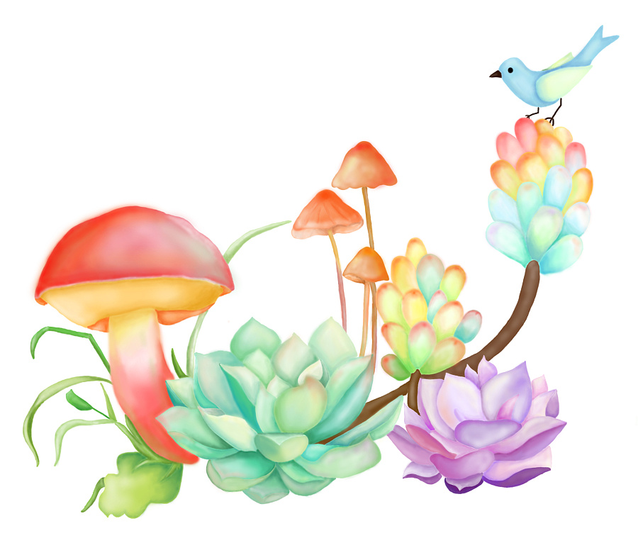 手绘多肉植物|绘画习作|插画|桃之妖