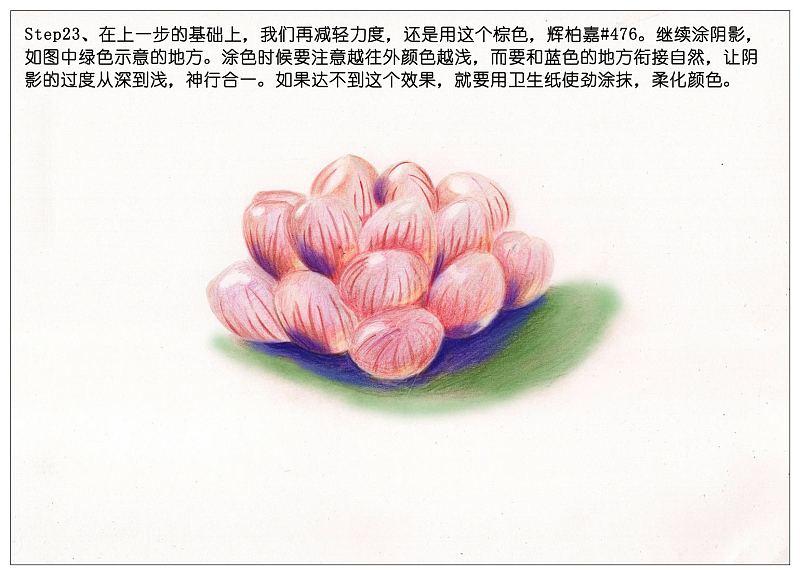 教程:【驴大萌彩铅教程152】手绘多肉玉露—冰灯玉露 (原创文章)