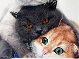 彩铅作品-猫
