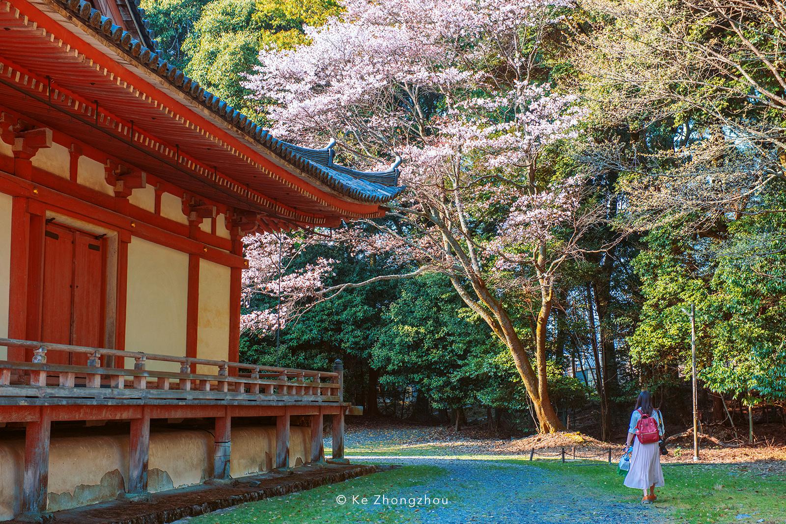 日本樱花季旅游|摄影|风光|KeZhongzhou - 原创