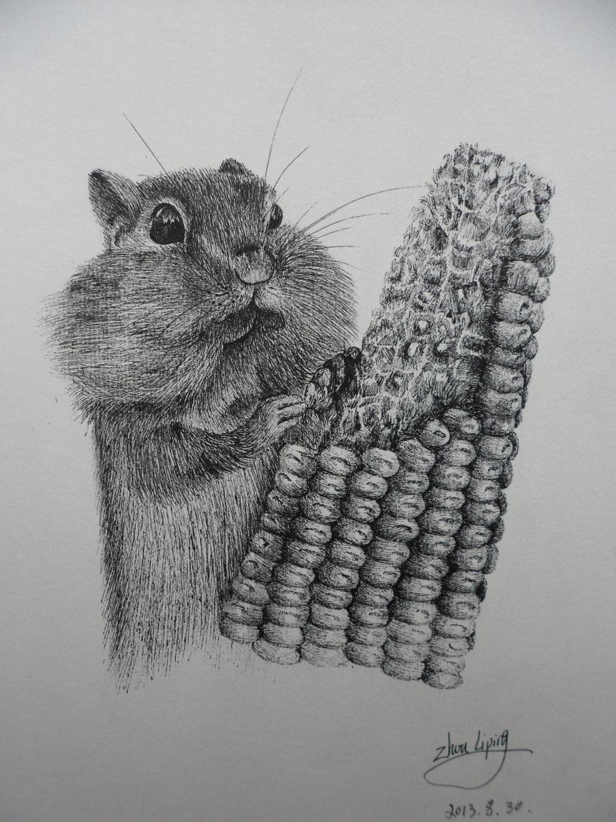 小松鼠系列.