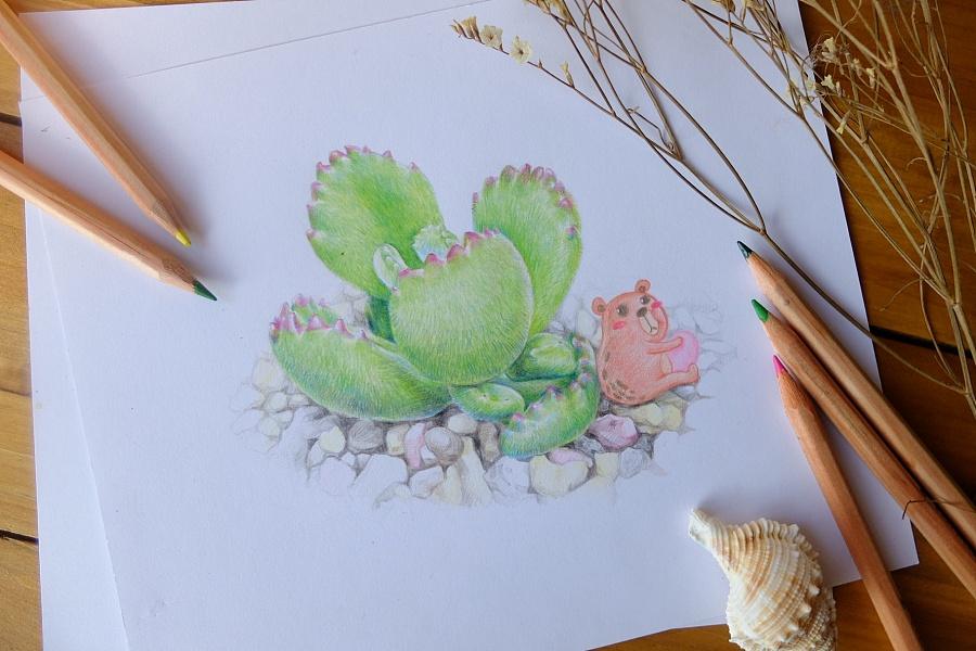 彩铅手绘多肉植物/熊童子|绘画习作|插画|魂儿