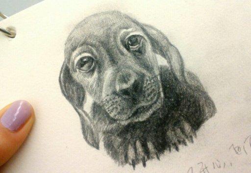 铅笔画~|绘画习作|插画|mmengdo