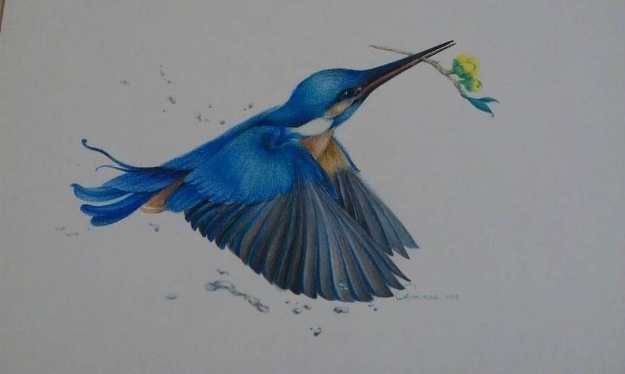 原创作品:手绘,水彩 彩铅,可爱的小鸟