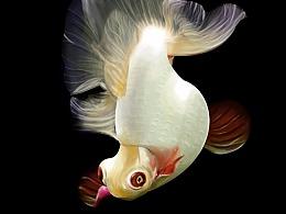 小鱼儿来一条