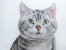 彩铅《猫》