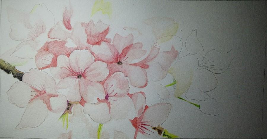 手绘彩铅桃花|绘画习作|插画|大鹤手绘