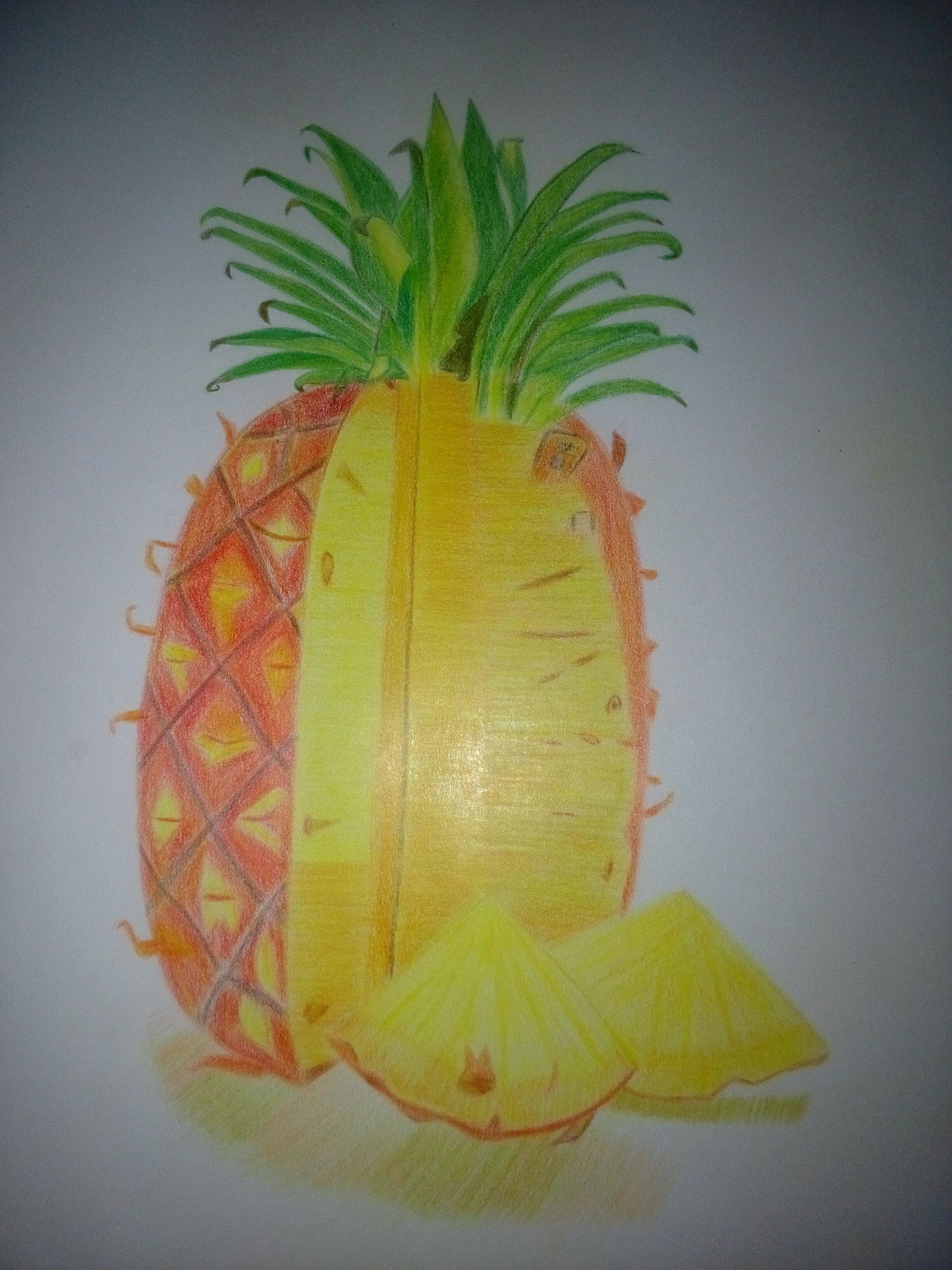 彩铅临摹 菠萝