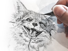 手绘素描 - 动物系列