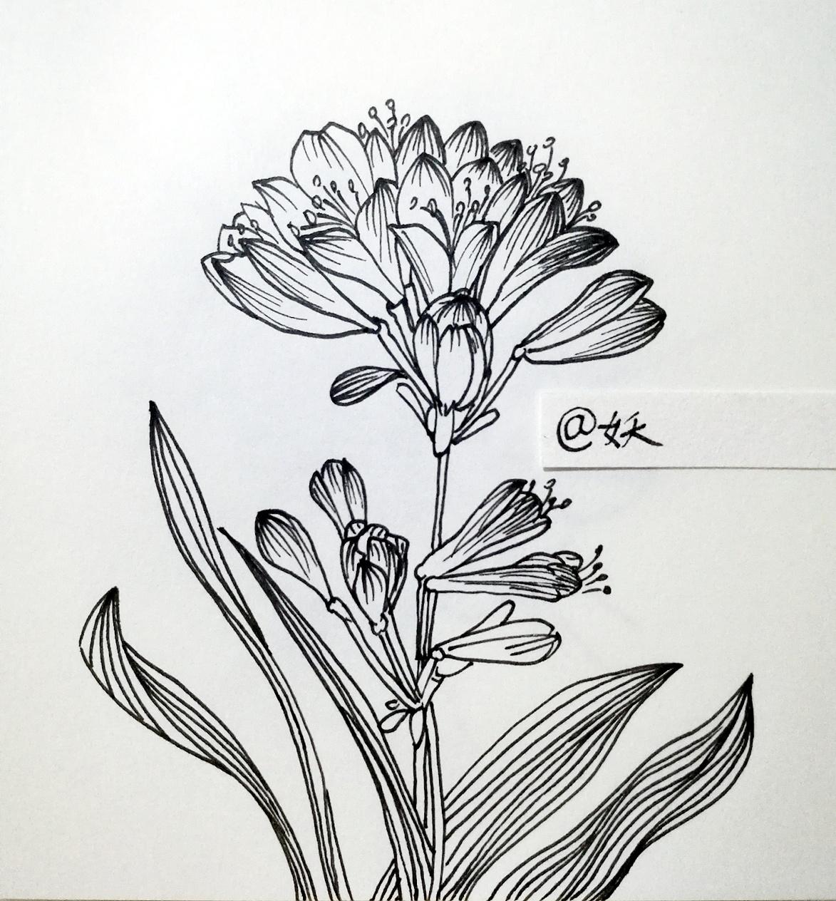 植物钢笔手绘教学