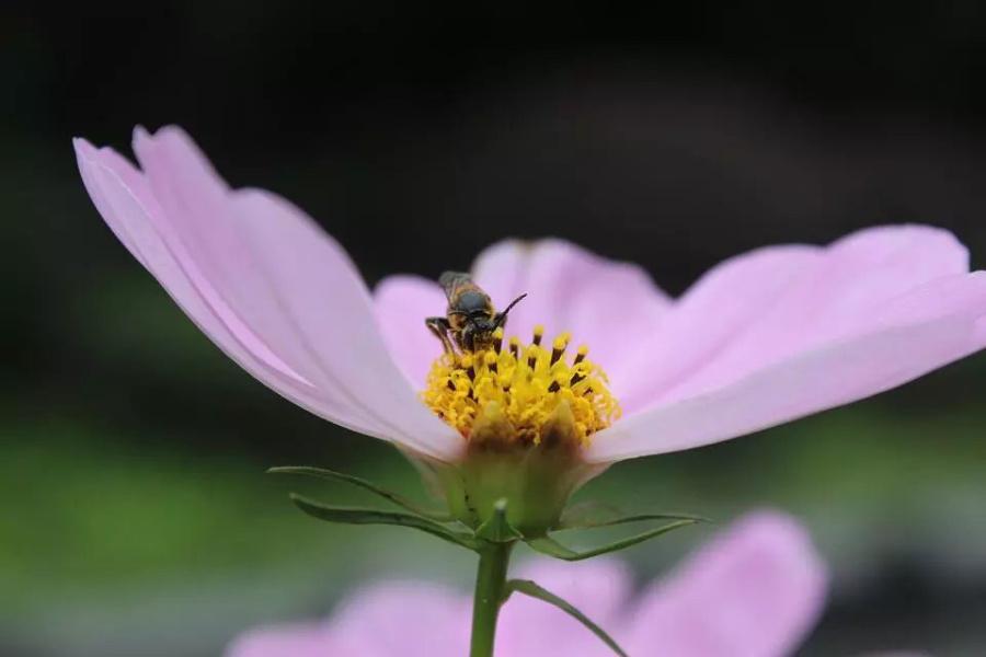 《动物采蜜花中憩》 宠物/蜜蜂 v动物 MissHH-大象音节第二个拼音要读轻声吗图片