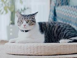 天猫国际 喵的情歌 | 剧情短片