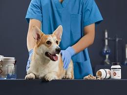 宠物保健品拍摄