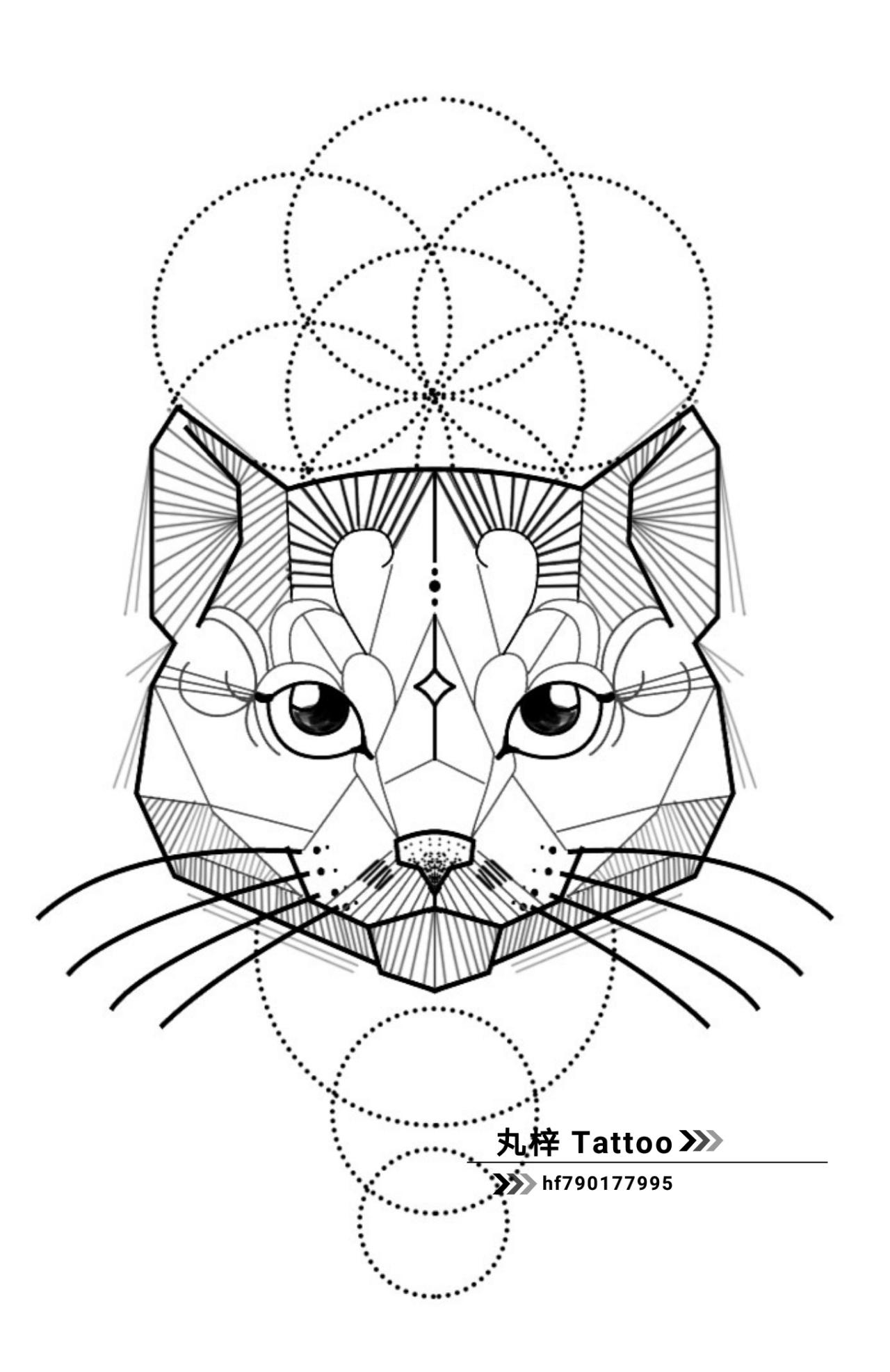 猫咪的简笔画 手绘