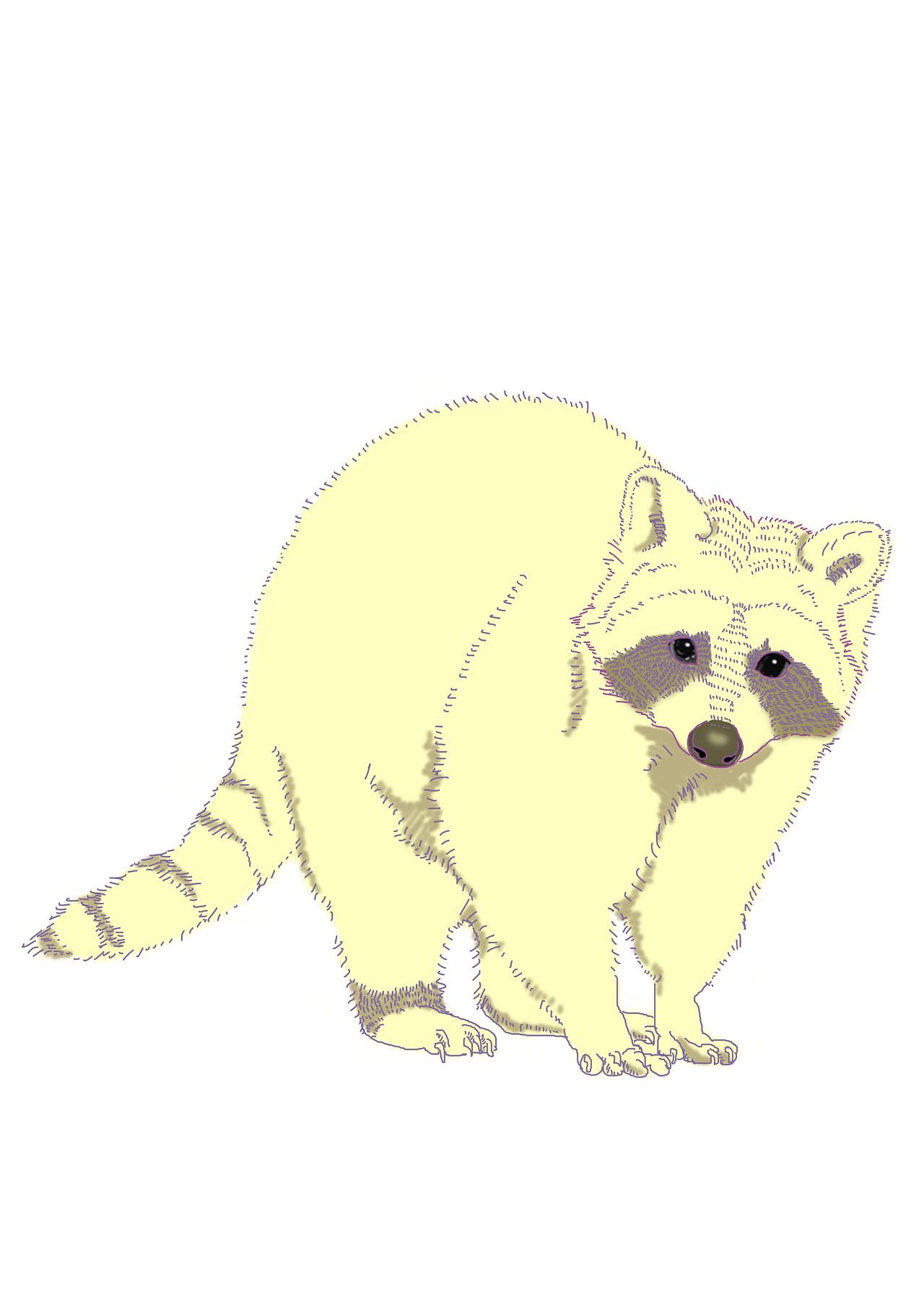 手绘小动物小猫小浣熊牛耕
