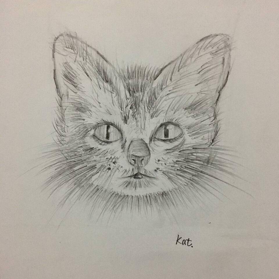 素描手绘-猫咪