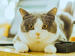 公司的猫被安排的明明白白