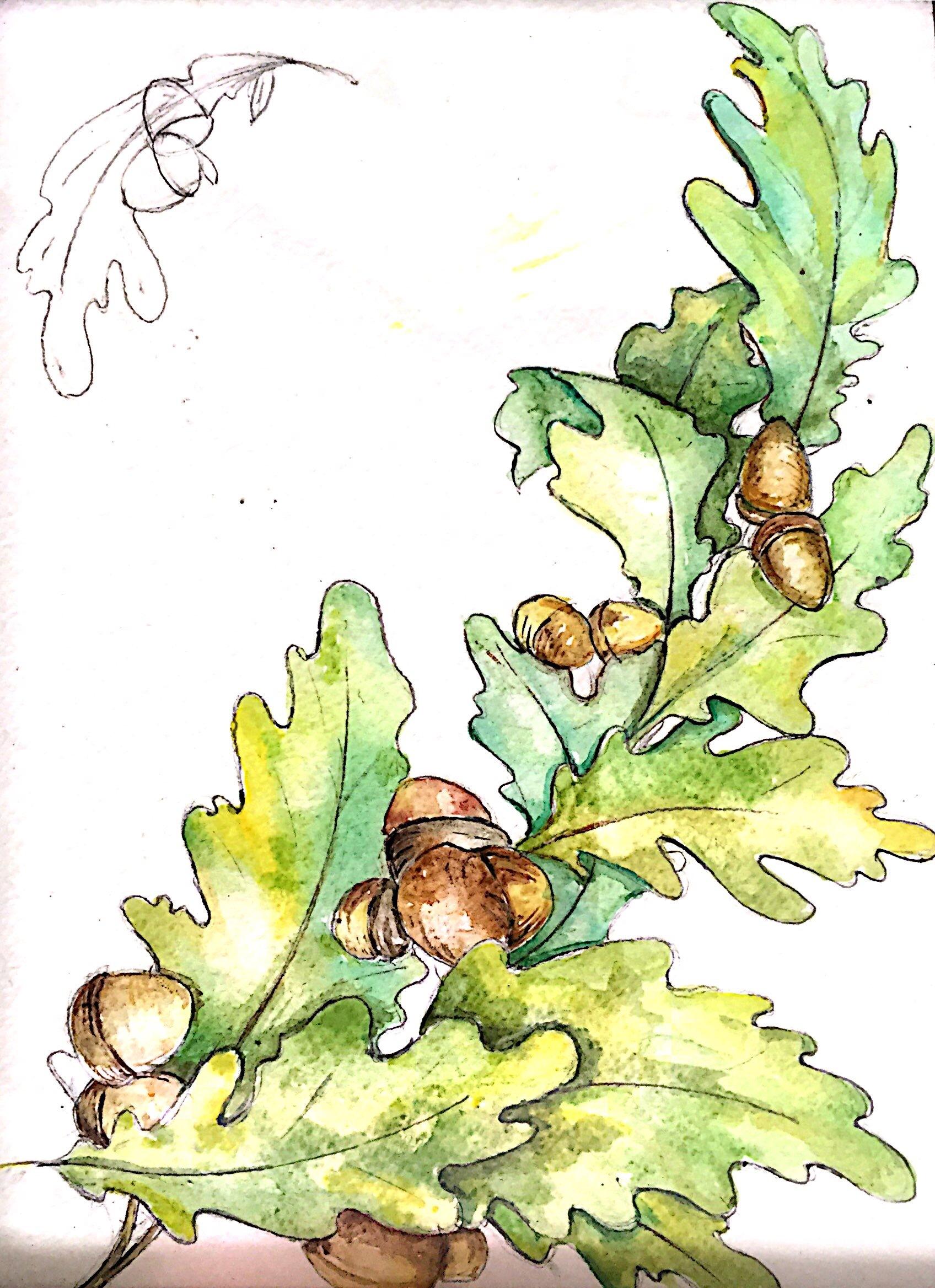 颗粒感 纯手绘水彩 植物