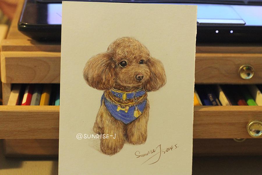 彩铅手绘一只泰迪狗狗