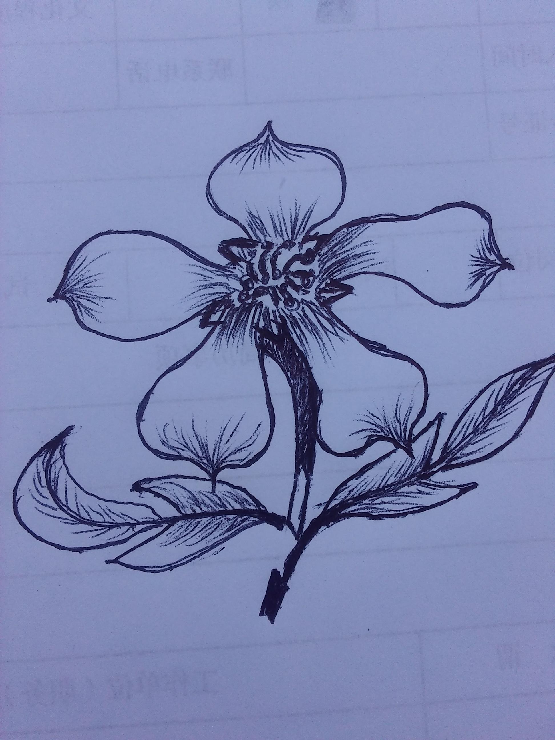 圆珠笔画-五瓣花