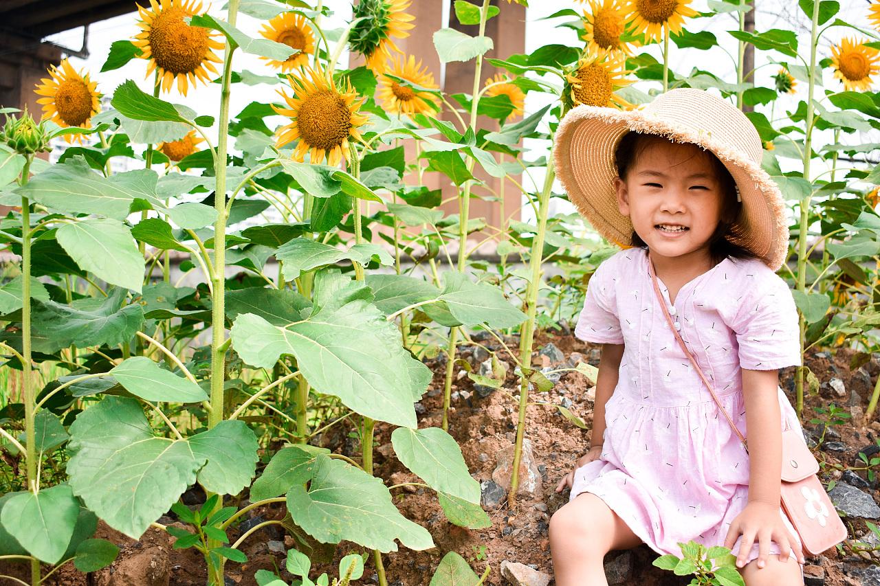 小姑娘和向日葵