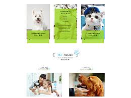 宠物网站首页