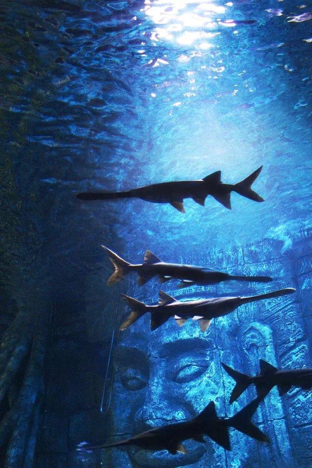 海底世界拍摄|宠物/动物|摄影|zhanchi1015