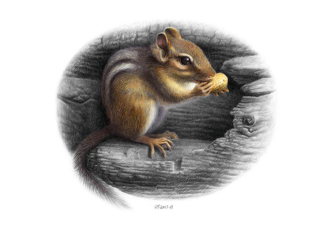 oy彩色圆珠笔画:花栗鼠